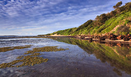 Long Reef Low tide sea floor Royalty Free Stock Images