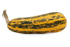 The long ripe zucchini and a little spotted  Royalty Free Stock Images