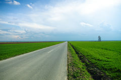Long road at the evening Royalty Free Stock Photography