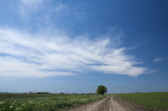 The long road. Through field and one tree Royalty Free Stock Photo