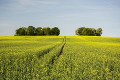Long road in a field of and trees on a hillock. Horizon and blue sky stock image