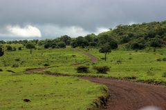Long Road in forest. During a safari trip in Tanzania, arusha national park royalty free stock image