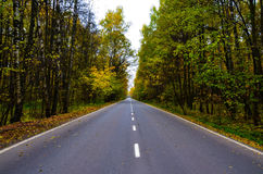 Long road. Highway runs among forest Royalty Free Stock Photos