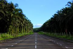 A long road that leads through a palm oil plantation royalty free stock photo