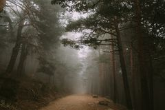 A long road in the middle of the forest with the fog on top of it royalty free stock photos