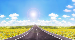 Long road  to high puffy cloud cheerful sunny blue sky with sunflowers field Royalty Free Stock Image