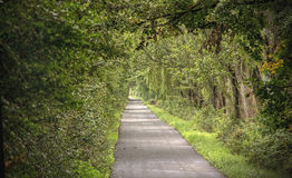 Long Road Under Trees Stock Image