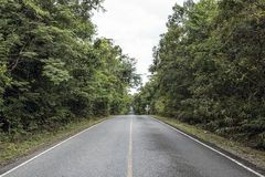 The long road in the woods. Road long in forest at Thailand Royalty Free Stock Image