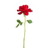 Long rouge Rose de cheminée Photo stock