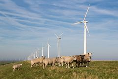 Long row Dutch wind turbines with herd of sheep in front Stock Photos