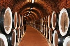 Long rows of vine tuns Stock Photography
