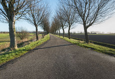 Long rural road with bare trees on both sides Stock Images
