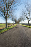Long rural road with bare trees on both sides Royalty Free Stock Photo