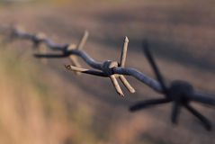 The long, rusty barbed wire with sharp thorns Stock Photo