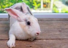 Long séjour de lapin d'oreilles sur la table en bois avec le fond de vert et de nature image stock