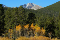 Long's Peak, golden aspens Stock Image