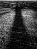 Long shadow of single tree and branches Royalty Free Stock Images