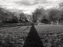 Long Shadow Tall Tree Royalty Free Stock Images