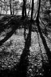 Long shadows. Cast across a forest clearing by a low sun Stock Image