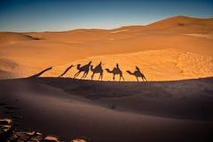 Long shadows of camel caravan in the desert Stock Image