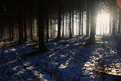 Long shadows in the forest Stock Photography