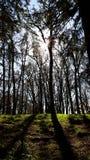 Long Shadows. Long tree shadows as the sun starts to set Stock Photos