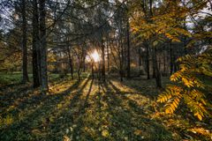 Long shadows of trees. Trees cast long shadows in the autumn wood in the short October evening Stock Photo