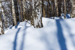 Long shadows of trees on white snow in the winter park Royalty Free Stock Photos