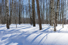 Long shadows of trees on white snow in the winter park Stock Image