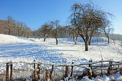 Long shadows on winter orchard Royalty Free Stock Photography