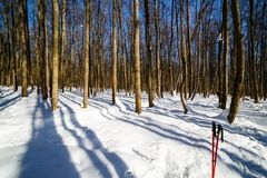 Long shadows in the wood Stock Photography