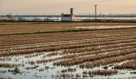 Flooded rice fields at dusk with house Stock Images