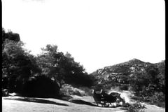 Long shot of galloping horses harnessed to an empty carriage on country road stock footage