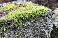 Long shot of the green grass grown on the rock Royalty Free Stock Photo