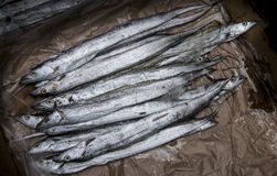 Long silver fish Stock Images