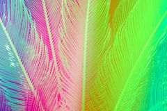 Long spiky palm tree leaves in beautiful geometrical pattern. Toned in vibrant neon colors. Botanical tropical nature background. Trendy funky style royalty free stock image
