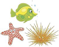 Sea urchin, starfish and fish Royalty Free Stock Images