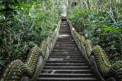 Long stairs with nobody in the middle of the jungle, temple stairs in the forest. Thailand Royalty Free Stock Image