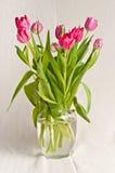 Long stem pink tulips Royalty Free Stock Photos