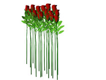 Long Stem Roses. Isolated long stem roses Stock Image