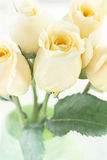 Long Stem Yellow Roses Stock Image