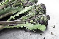 Long Stemmed Broccoli Royalty Free Stock Photo