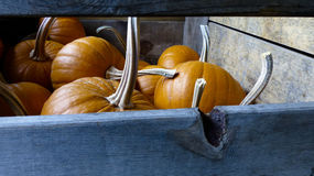 Long Stemmed Pumpkins in a Wooden Crate Royalty Free Stock Photography