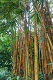 Long stems of bamboo. And bright light behind Stock Image