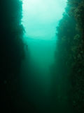 Long Stone End gully. Kelp growing on the sides of the gully at Long Stone End, in the Farne Islands, Northumbria, England. Moody natural light  in green water Stock Images