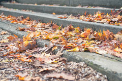 Long stone steps covered with fall leaves. Oak and maple, bright colors Royalty Free Stock Photography