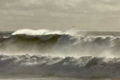 Long stormy sea wave Stock Image
