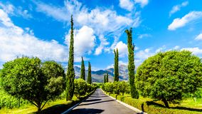 Long Straight Driveway through a Vineyard near Franschhoek in the Western Cape province of South Africa. With the Drakenstein Mountains in the background stock images