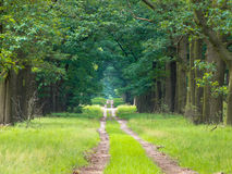Long straight forest lane. Dissapearing on the horizon Royalty Free Stock Photo