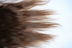 Long, wavy brown hair on a teenage girl stock image